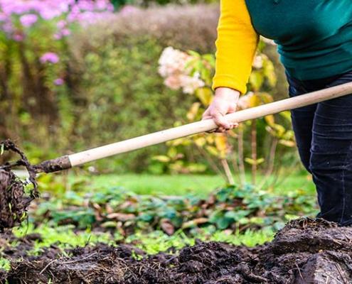 lavorazioni orto a novembre: disinfettazione e mantenimento piante autunno-invernali