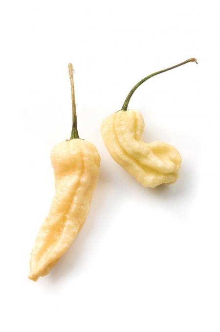 Peperoncino Bhut Jolokia white l'Ortofruttifero
